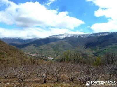 Cerezos flor Jerte; Nogaleas; senderismo por madrid; excursiones montaña madrid;circo gredos